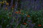 116b virág 01_resize